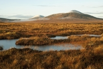 The Flow Country Northern Scotland This is the largest bog in Europe and the last real wilderness in Britain Photo by Eleanor Bentall