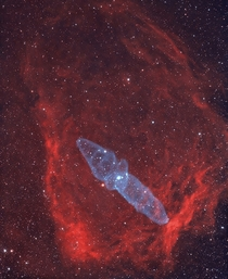 The Flying Bat Nebula and the Giant Squid Nebula in the constellation Cepheus the King some  light-years away