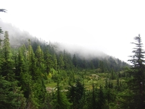 The foggy forests of Northern BC BC Canada