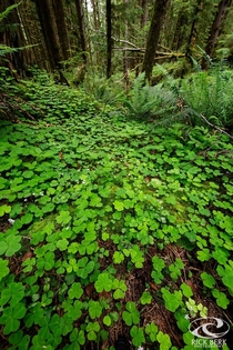 The forest floor in Ecola State Park Cannon Beach OR