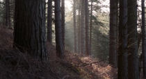 The forest looked pretty cinematic the other morning - Brocton Coppice Staffordshire UK