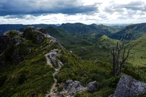 The forest of Coromandel from the Pinnacle summit NZ - x OC