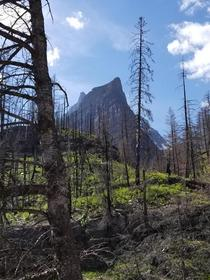 The forest reclaiming the mountainside Glacier National Park Montana  OC