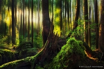 The forests of Ecola State Park Oregon  by Dylan Toh