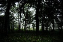 The Forests of Nagarhole