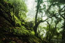 The forests of New England National Park in New South Wales Australia  by Drew Hopper