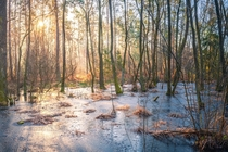 THE FROZEN SWAMP by IGFarbik