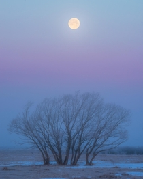 The full moon on a foggy morning in southeast Saskatchewan