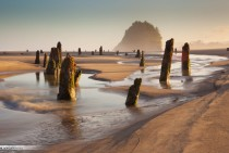 The Ghost Forest of Neskowin Oregon