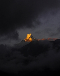 The glorious Machapuchare wearing a golden crown as the first rays of sun hits the top This fishtail summit is one of the few places on earth where man has never set foot on Zoom in did you see a half face on the right side Taken from Ghandruk village in