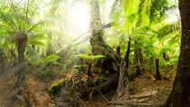 The Great Otway Rainforest Australia