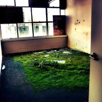 The green room Abandoned office space Christchurch New Zealand