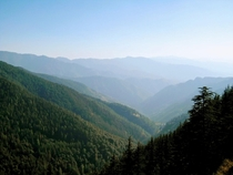 The high-altitude coniferous forests of Himachal Pradesh India   x