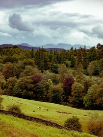 The hills and forest above Grassmere in the Lake District UK