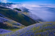 The hills of the Ventana Wilderness above Big Sur California  by Douglas Croft