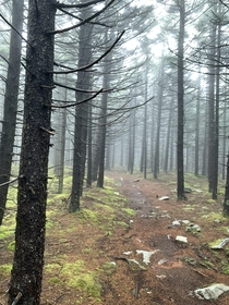 The Huckleberry trail in Monongahela National Forest