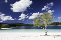 The impossible clarity of Lake McKenzie Fraser Island