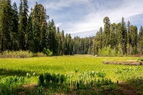 The incredible Crescent Meadow Sequoia National Park