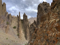 The jagged spires and red fungus on the descent from Stok La Hemis National Park Ladakh India