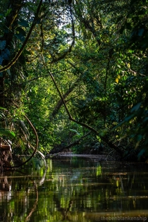 The jungle canals of Tortuguero National Park Costa Rica Taken Feb
