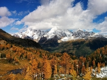 The Larches of Jumbo Pass