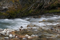 The last day of fall in a Colorado mountain stream