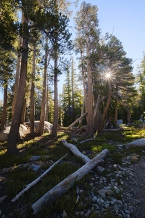 The last morning of a -day backpacking trip through Desolation Wilderness
