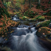 The last of this years autumn colours down in Stock Ghyll Force Lake District Cumbria England