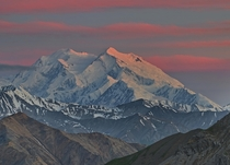 The last rays of the midnight sun hitting Denali seen from the backcountry Denali is one of the best mountains in the world to see alpenglow like this since its so far north the sunsets last for hours