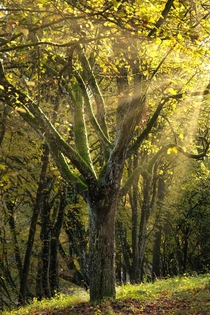 The light makes this tree look like a Magic card The Schnbuch Germany