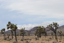The Little San Bernardino Mountains from Joshua Tree National Park Ca March