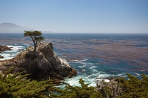 The Lone Cypress California