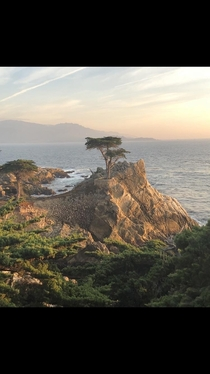 The Lone Cypress in Pebble Beach CA OC  x