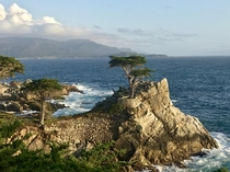 The Lone Cypress Pebble Beach CA