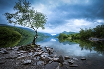 The Lone Tree at Snowdonia National Park - North Wales