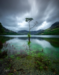 The Lone Tree Buttermere The Lake District