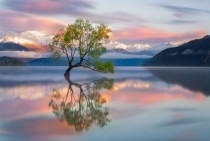 The lone tree majestic landscape of New Zealand
