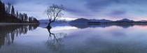 The lone tree of Lake Wanaka New Zealand  photo by Maxwell Campbell