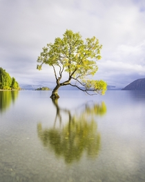 The Lone Tree - Wanaka  Marco Grassi Photography
