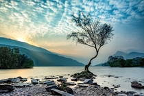 The Lonely Tree Llyn Padarn North Wales