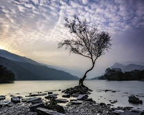 The Lonely Tree Llyn Padarn North Wales  OC By Ste Clayton