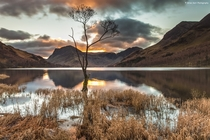 The Loner - the famous tree on Buttermere in the Lake District England  by Brian Kerr