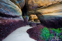 The Lost Passage Devils Punch Bowl at low tide Oregon Coast  Photo by Adrian Klein