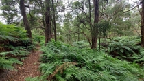 The lush bushland of the Two Bays Walking Track Victoria Australia