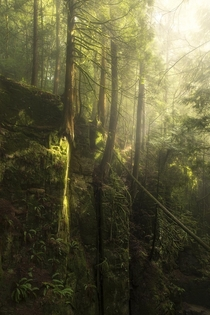 The lush rainforests of the PNW are truly beautiful Dreamlike canyons moss ferns and fog Cypress Falls BC  tristantodd