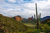 The Lush Sonoran Desert in Superstition Wilderness Arizona USA