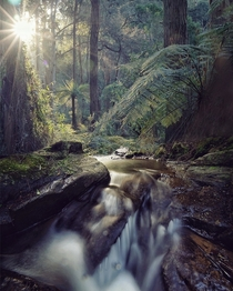 The majestic Dandenongs