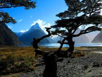 The Majestic Milford Sound NZ