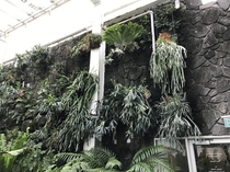 The massive stag horn ferns at the como conservatory are my favorite