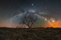 The milky way arch over a tree in Saskatchewan